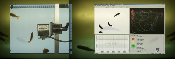 c 2012 Corinne Studer fishbag measurement
